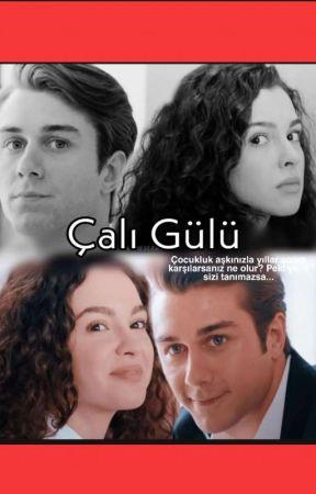 Çalı Gülü AsDor by kardelenvehercaii