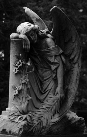 Fallen angel's rise    Todoroki x reader    by wind__blow