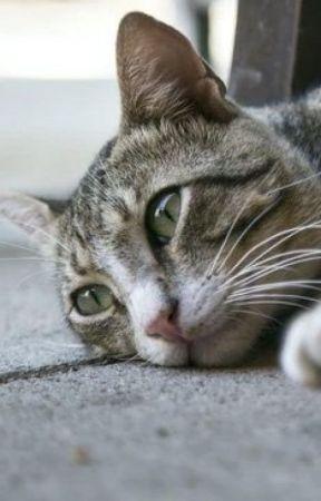 O gato inseguro by SoUmRandom
