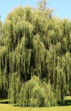 Under the willow by unfunctioning_gay