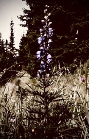 Aconite Blooms by mama_kurogiri