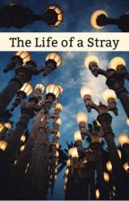 The Life of a Stray by AnnaC_Writer