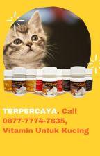 TERPERCAYA, Call 0877-7774-7635, Vitamin Untuk Kucing by suppliervitamin