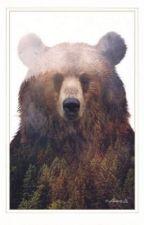Kyra Sohma - Bear Zodiac by Morberyy