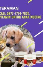 TERAMAN, Call 0877-7774-7635, Vitamin Untuk Anak Kucing by jualvitaminkucing