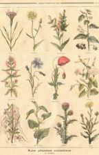 summer in the city,     paul mccartney  by hazzaluvbot