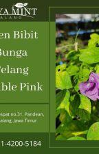 FRESH!,WA 0821-4200-5184, Agen Jual Bunga Telang Terdekat Depok by BungaTelangIndonesia
