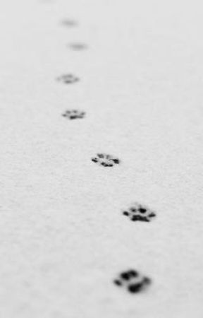𝑺𝑯𝑬 𝑾𝑶𝑳𝑭   𝒎𝒃/𝒔 by babywolvess