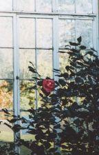 Giardino di Camelie di the_bell_jar