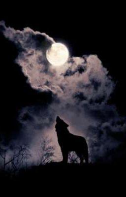 [abo] dưỡng sói