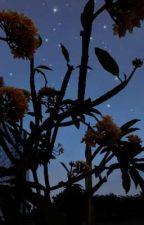 Star's Sky by WitnessTravel