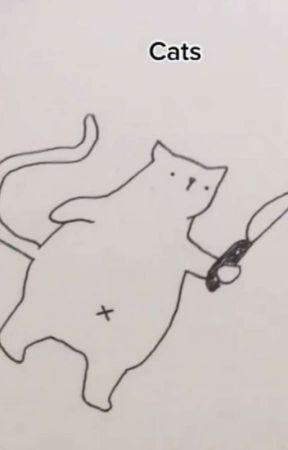 cho mèo nhà đến cafe mèo làm thêm được không? by JessLevine90