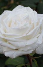 La Rosa Bianca  by Ilenia209730