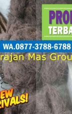 WA 0813-9313-9465, Pengepul Ijuk Untuk Atap Bojonegoro by jualijukhitammurah