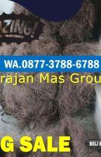 WA 0813-9313-9465, Pengepul Ijuk Untuk Atap Jember by jualijukhitammurah