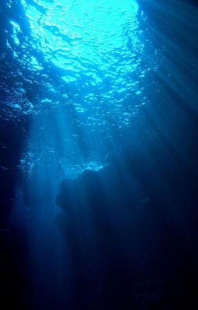 [Bác Chiến] Đại Dương by ToilaPaopao