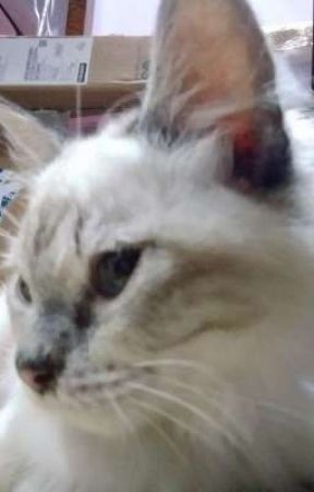 meow by leviminumteh