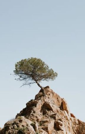 The lowest trees in people to the highest rocks by kindadazed