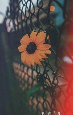 Yêu - Love • Amore Jang •