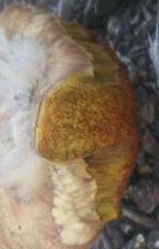 Mushroom hunting seasons by patrick20050