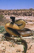 Venomous animals rp by PrehistoricPrimal