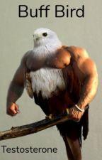 Testosterone Bird & McKenzie  by randlesoup