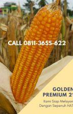 BENIH BERKUALITAS, 0811-3655-622, bibit jagung panen cepat by produksibenih