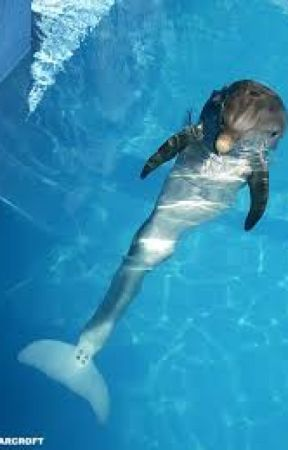 winter the dolphin's hope :)   by _tiffanyblancher