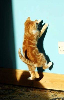 [trans] Mèo nhỏ - Jark GOT7