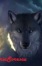 Wolf by DariaSorescu