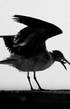 Black Seagulls by DoomedPoet
