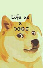 Life as a Doge by ShibeTheLettuce
