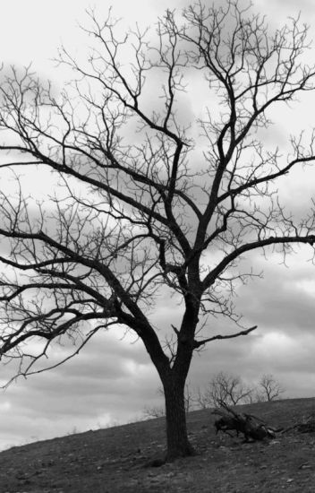 A Sublime Elegância do Caos - Ato Um: Árvore