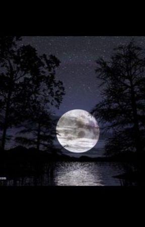 Night Fall by LaneyBugzzz