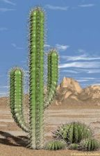 Cacti by LTlovesfruits