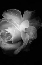 La Rosa Bianca by Demetra28