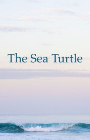 The Sea Turtle  by thezookeeper2013