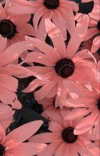 being seventeen's little sister ➳ svt by ellesthetix