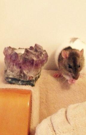 Random book on all Ma rats!  by Agent_natashaR
