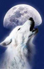הזאב by Adidabach