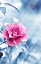 Flowers in the Snow by momamoose