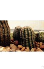 Cacti by tamerabolden