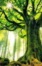 Trees & Memories by TwoGirlsHoldingHands