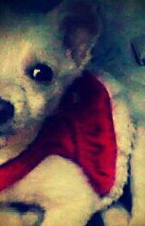 Un Perro Llamado Maples Arce. by Rain_Feelings