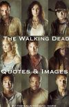 Quotes & Images  TheWalkingDead ✔️ cover
