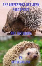 The difference between porcupines and hedgehogs  by Hedgehoglove