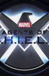 Agents of S.H.I.E.L.D. x Reader cover