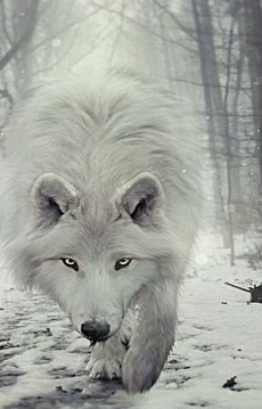 the white wolf bxb  by loveboyxboy1