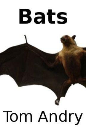 Bats by TomAndry
