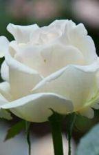 A Single Rose by KatelynPotts02